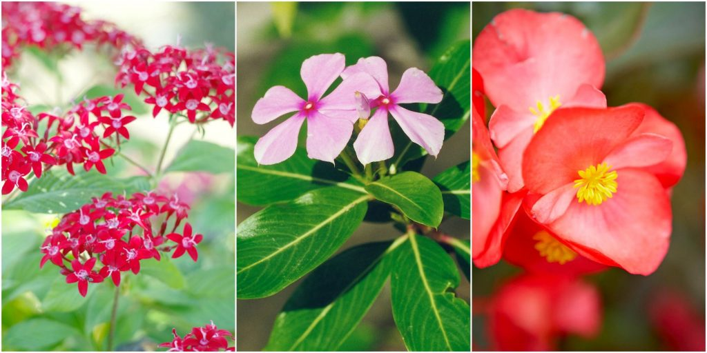 Heat Tolerant Flowers
