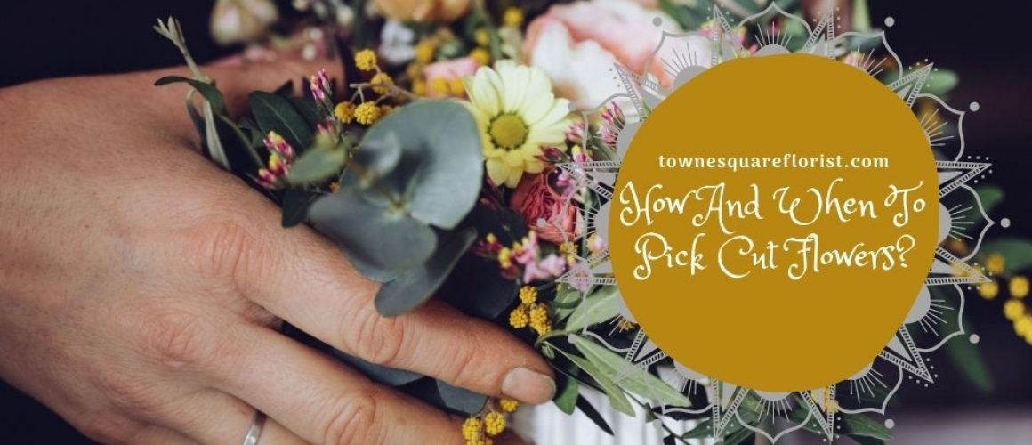 How And When To Pick Cut Flowers