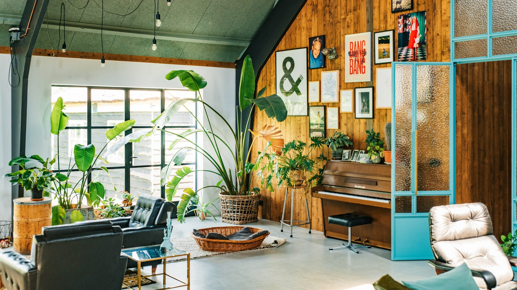 Plants Decorations